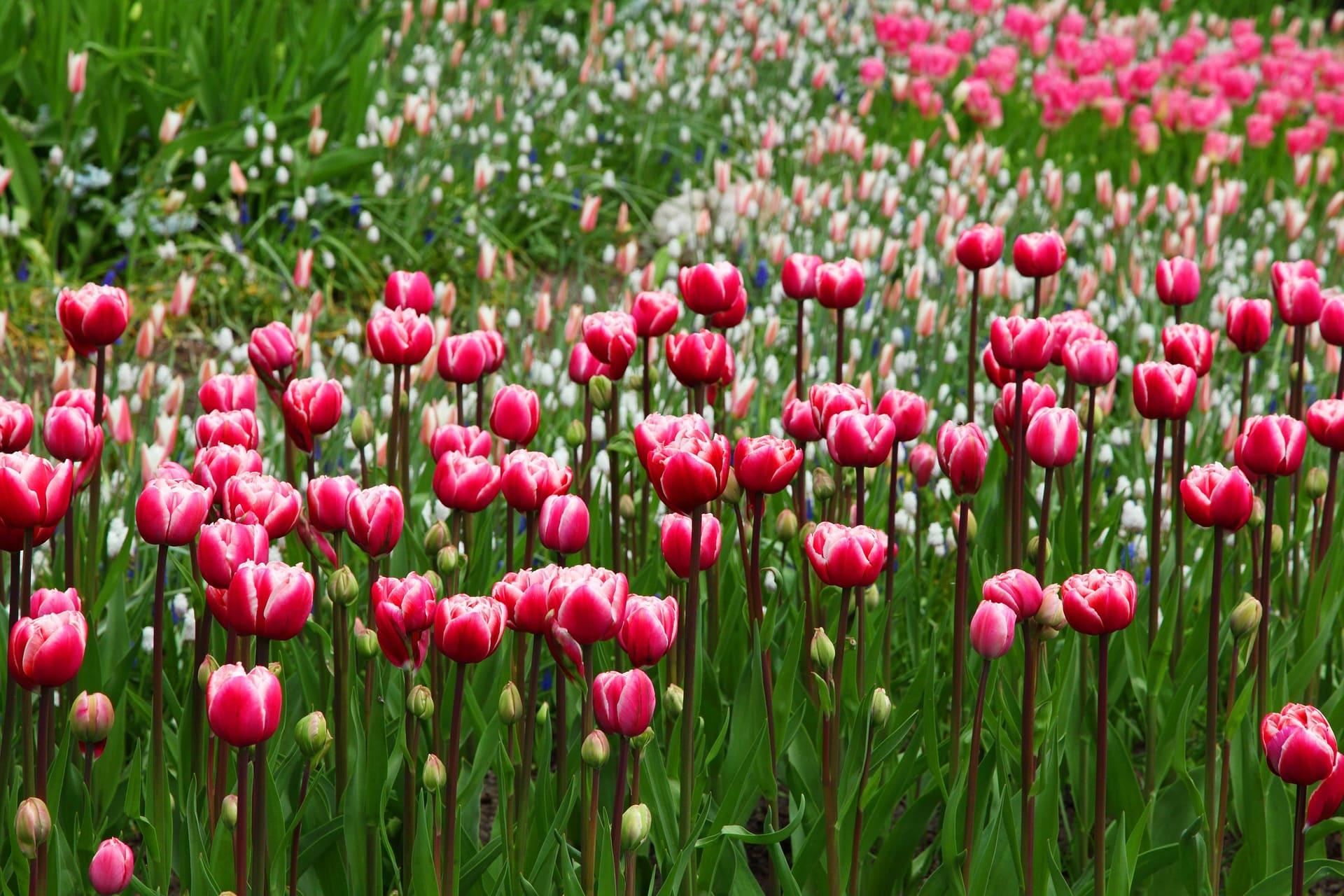 Gartenarbeit – Freude statt Belastung