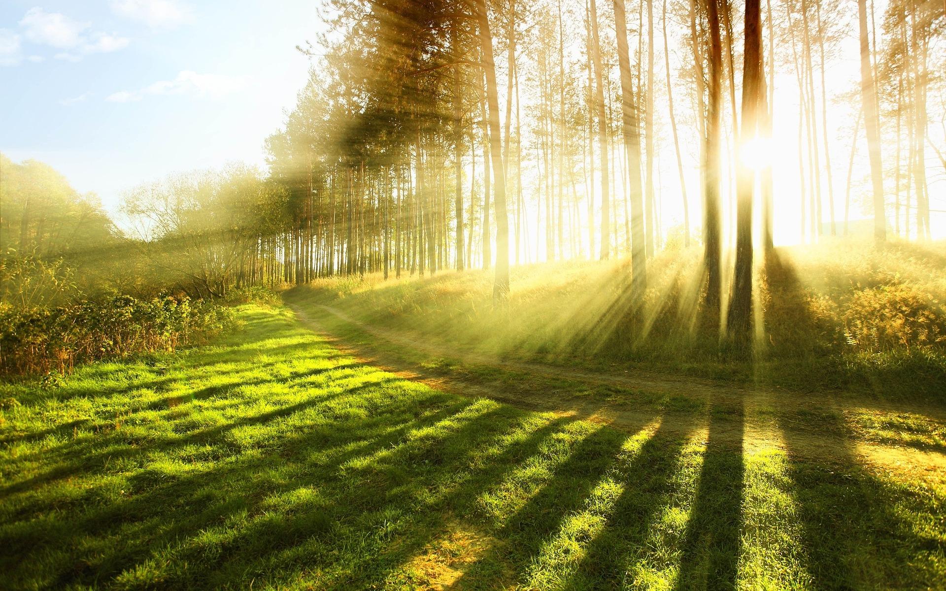 Sonnenstrahlen Wald Pixabay