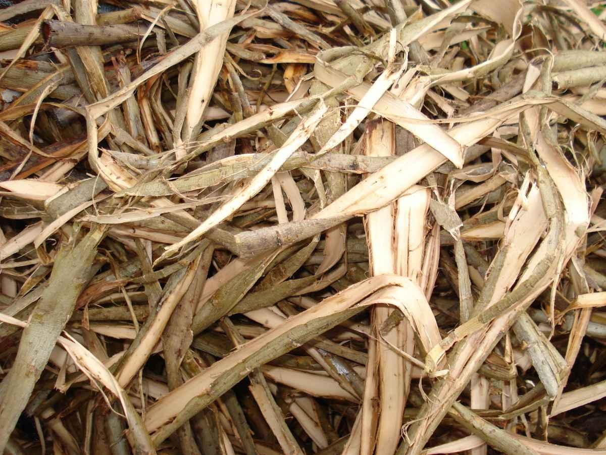 Weidenrinde